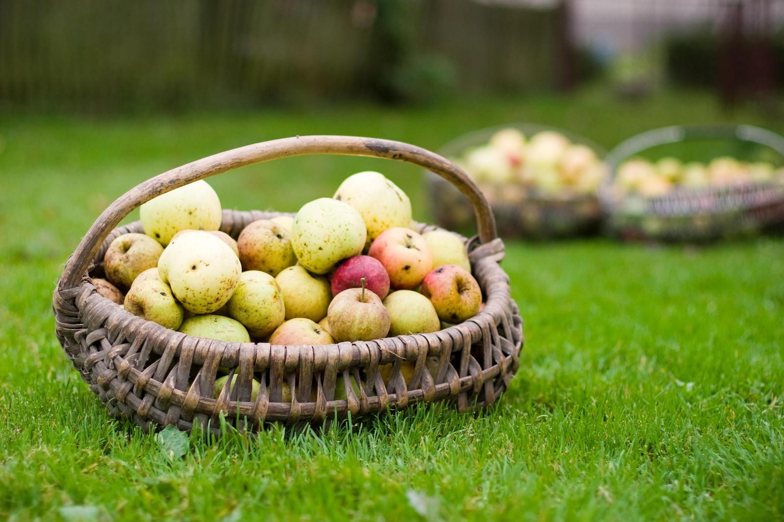 obuolių acto nauda sveikatai širdžiai