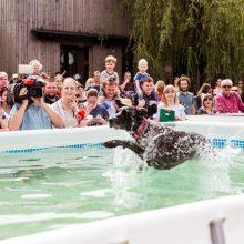 Pirmasis šunų šuolių į vandenį turnyras Lietuvoje: kova buvo įtempta