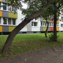 Klaipėdos daugiabučių namų kieme pavojus dėl medžių: žmonės baiminasi nelaimių