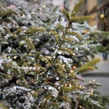 Pavogtos Kalėdos: ilgapirščiai nusitaikė į eglutes