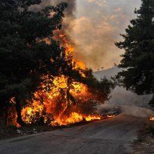 JT: dėl klimato kaitos kasmet įvyksta vis daugiau gaivalinių nelaimių