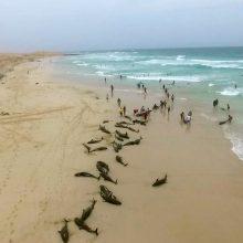 Prie Mozambiko krantų žuvo dar 86 delfinai