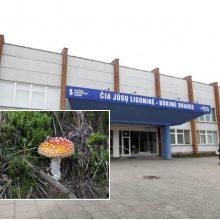 Prasidėjo grybų sezonas: Klaipėdos medikai gelbėjo jais apsinuodijusių žmonių gyvybes