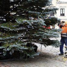 """""""Keliaujančios Kalėdos Klaipėdoje"""": mieste sužibs Kalėdų eglutė (tiesiogiai nuo 17 val.)"""