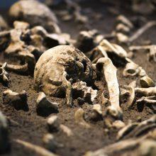 Tvarkant komposto duobę, rasti žmogaus kaulai