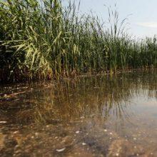 Klaipėdoje ir Panevėžyje vandens telkiniuose rasti jau pradėję irti žmonių kūnai