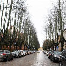 Klaipėdos savivaldybėje – triukšmas dėl medžių: kirsti ar palikti?