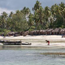 Zanzibaro rojuje svaigino ir vaizdai, ir skoniai, ir kvapai
