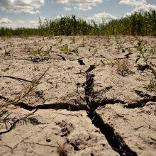 Lietuvoje dėl sausros ketinama skelbti ekstremalią padėtį