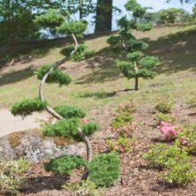 Vilniuje kuriant japonišką sodą ruošiamasi pradėti žemės darbus