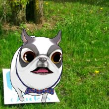 Kviečia ieškoti žaismingų šuniukų Bernardinų sode