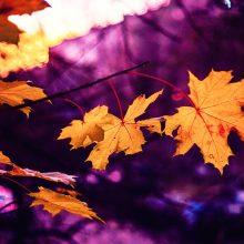 Orai: rudens žvarba išstums vasarišką šilumą
