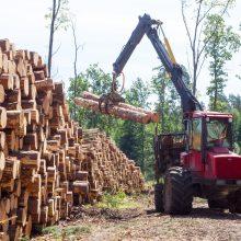 Lietuviškos medienos eksportas vietos pramonę paliko be žaliavų