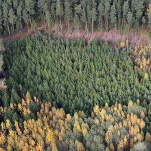 Siūloma, kad Valstybinių miškų urėdija turėtų 26 filialus