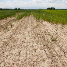 Sausra skaudžiausiai kirto Dzūkijos ūkiams