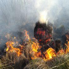 Miškininkai įspėja dėl didelio miškų gaisringumo: ragina Jonines švęsti atsargiai