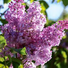Orai: gegužės pradžia – saulėta, bet su šalnomis