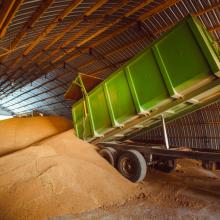 Gegužės pradžioje didėjo grūdų supirkimo kainos