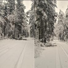 Įvertino gausaus sniego žalą miškams: pažeista 40 tūkst. medžių