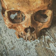 Trakų rajone prie kapinių rastos kaukolės dalys