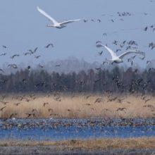 Aplinkosaugininkai: Vyriausybė įteisino Žuvinto rezervato niokojimą