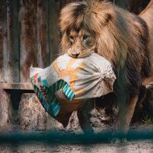 Rekonstrukcija zoologijos sode prasidės kitąmet, darbai baigsis 2023-ųjų viduryje