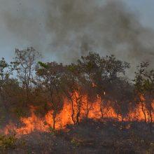 Amazonės šalys aptars miškų saugos strategijas