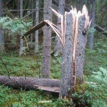 Savaitgalį virto medžiai: ugniagesiai pataria saugotis gūsingo vėjo ir pirmadienį