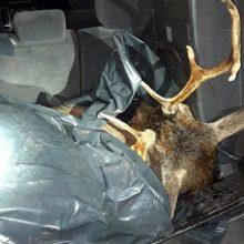 Po medžioklėje nušauto tauriojo elnio pradėtas tarnybinis patikrinimas