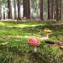 Daugėja pasiklydusių miške: mygtukinis telefonas gali pabloginti situaciją