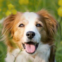 VMVT: nuo gegužės privaloma pateikti daugiau informacijos apie parduodamą gyvūną