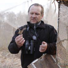 Ventės rage – tyla: nutrūko paukščių migracija