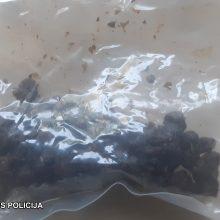 Policija: grybų randama ne tik miškuose, bet ir per kratas