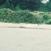 Į savartyną išmesti kalnai agurkų įsiutino internautus