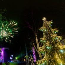 Palangoje sutvisko Kalėdų eglė