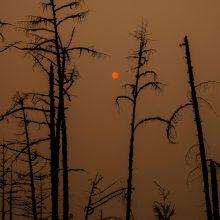 """Mokslininkai: žemės """"gyvybiniai rodikliai"""" prastėja ir muša naujus rekordus"""