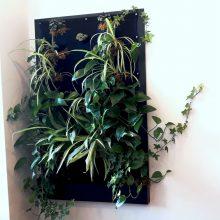 Mėgstate augalus, tačiau jiems trūksta vietos? Kauniečiai siūlo originalią išeitį