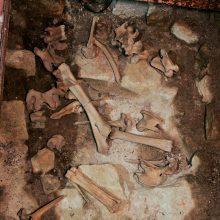 Kauno rajone rasti galimai žmogaus kaulai