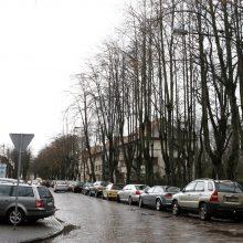 Klaipėdos valdžia skubėti nežada: drastiškų medžių kirtimų kol kas nebus