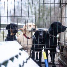 Kraupios istorijos tęsinys: išgelbėti gyvūnai laukia Kalėdų stebuklo
