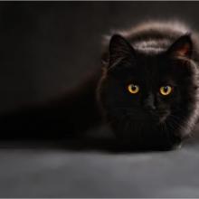 Dingusi katė rasta po penkerių metų už tūkstančių kilometrų