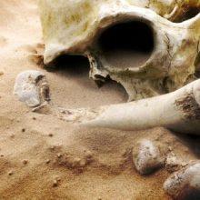 Anykščių rajone partizanų kape rasti žmogaus kaulai