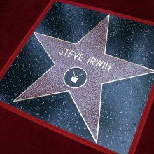 """""""Krokodilų medžiotojas"""" S. Irwinas Holivudo šlovės alėjoje pagerbtas žvaigžde"""