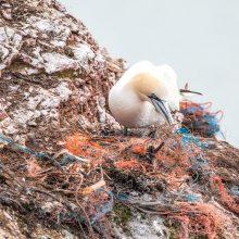 Tyrimas: nurytos plastiko dalelės kenkia net ir visiškai sveikiems paukščiams