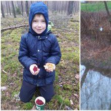 Kauniečiai stebisi bebrų graužiamais medžiais, randamomis bruknėmis ir voveraitėmis