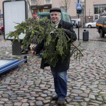 Skelbiamos vietos, kur Klaipėdoje bus galima palikti kalėdines eglutes