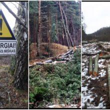Dėl kertamų medžių Giruliuose – įsiūtis: kas ir kodėl kerta mišką?
