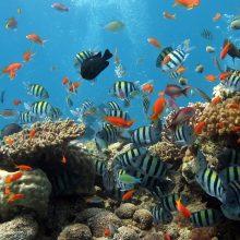 Visuotinis atšilimas naikina koralinius rifus kur kas greičiau nei manyta