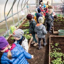 Meilę daržovėms ugdo nuo mažens: darželinukams vėl dovanos šiltnamius