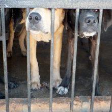 ŽŪM nepritaria dalies parlamentarų siūlymams dėl gyvūnų veisimo